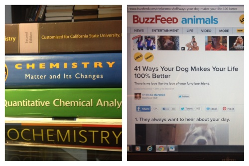 Chemistry or Cute Animals? The Struggle Is Real.